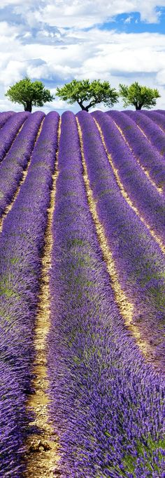 Famous View of Lavender Field with Cloudy Sky in Provence, France 13 Amazing Photos of Lavender Fields that will Rock your World Beautiful World, Beautiful Gardens, Beautiful Places, Belle Image Nature, Belle France, Provence France, Cool Photos, Amazing Photos, Famous Photos