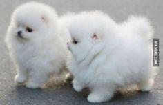 Two Tiny, Fluffy Furballs!!