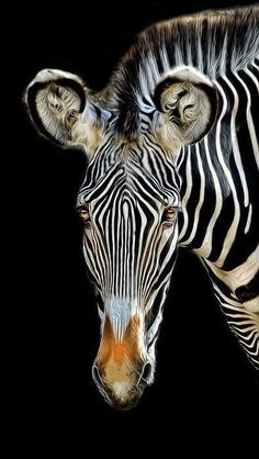 "expression-venusia: "" zebra Expression """
