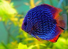 99 Ide Jenis Dessin Aquarium HD Download Gratis