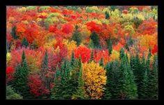"""Résultat de recherche d'images pour """"paysage canada automne"""""""