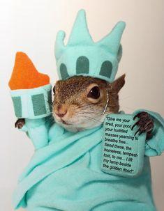 Sugar Bush Squirrel  By far the most famous squirrel.