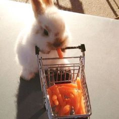 Even bunnies have errands to run. Cutest bunny there ever was.