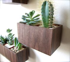 """Hanging Wall Plant Holder, Planter for Succulents, Cacti, or Air Plants in WALNUT wood, roughly 5""""x3""""x3"""", air plant available for added cost..."""