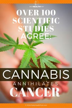 In ancient India, cannabis was used to treat ailments such as insomnia and pain. The Greeks used it to cure ailments such as nosebleeds and tapeworms. In Medieval Islam, history shows cannabis used as a�diuretic, antiemetic, and antiepileptic