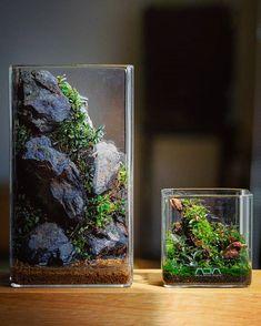 Bottle Terrarium, Terrarium Plants, Mini Aquarium, Planted Aquarium, Moss Garden, Bonsai Garden, Indoor Water Fountains, Nature Aquarium, Aquarium Design