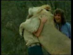 Christian The Lion