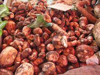 Les tubercules sont d'une grande aide pour la santé - La nature est d'une grande richesse en légumes, nous verrons les légumes santé et saveur, avec les tubercules et les réceptacles, les tiges et les bulbes, d'une grande richesse en tant que met, mais aussi pour leur valeur alimentaire et leur richesse en propriétés thérapeutiques.  http://www.complements-alimentaires.co/wp-content/uploads/2015/02/tubercules.jpg - Par Nathalie sur Compléments alimentaires  #Alim