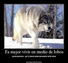 Resultado de imagen para lobos con frases tristes