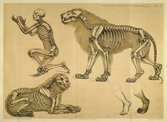 Morbid Anatomy: Comparative Anatomy: Animals and the Fundamentals of Drawing Weekend Workshop with Chris Muller, NYU Tisch School of the Arts, May 5 & 6, Observatory