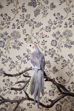 Birds of a Feather de Claire Rosen, una serie de retratos de pájaros exóticos con sabor victoriano