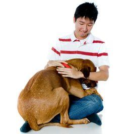 Ensinar o cachorro a ter medo de trovão, de veterinário ou de banho