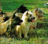 Tribù di Cani