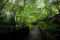 gioji temple. Kyoto, Temple, Sidewalk, Country Roads, Japan, World, Amazing, The World, Temples