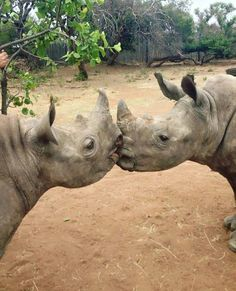 rhino love With optimal health often comes clarity of thought. Click now to visit my blog for your free fitness solutions!
