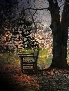 Blossom Bench, Portland, Oregon  photo via heart