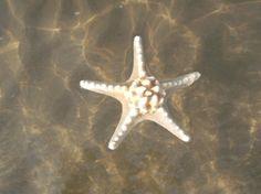 estrella aigua