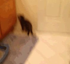 Whatever works, right? ( this person posted this gif with the quote - My kittens have the cutest way of getting to the sink)