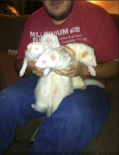 My son Chris holding Leto, Pip; Whitey and Moe
