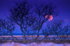 Tonight's Full Snow Moon at sunset from Skiff Hill, Eastham Cape Cod National Seashore. Dapixara photography https://dapixara.com