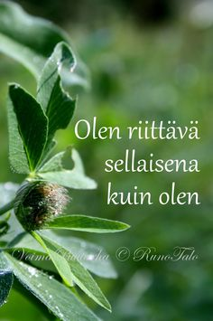 RunoTalon voimapuutarha: Voimarunot & voimakortit vko 10: Kerro tänään itsellesi, että... Finnish Words, Motivational Quotes, Inspirational Quotes, Boho Beautiful, My Point Of View, Affirmation Cards, Spiritual Path, Positive Vibes, Cool Words