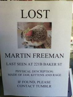 Lost: Martin Freeman