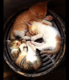 Sleeping Circle by The Ace Clicker