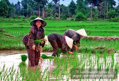 | Laos People Photo15 | Flickr - Photo Sharing!