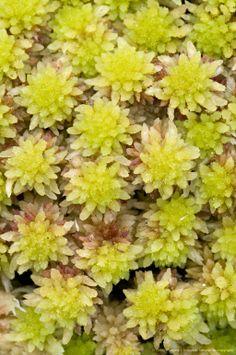 north carolina bog plants | Red sphagnum moss (Sphagnum sp.) with a fallen flower petal, Canadian ...