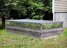 We've had great success growing strawberries in raised garden beds. Now we're giving growing in rain gutters a go! Strawberry Beds, Strawberry Planters, Strawberry Garden, Growing Raspberries, Grow Strawberries, Bird Netting, Garden Yard Ideas, Garden Fences, Garden Tips