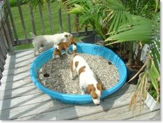 Potty area for upper deck. Holes in bottom of pool, gravel can be sprayed with bleach solution and hosed off for cleaning