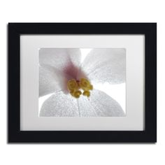 Escargo Begonia Flower by Kurt Shaffer Matted Framed Photographic Print