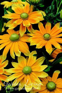 Klikk for å lukke bilde, klikk og dra for å flytte. Planters, Sun, Pictures, Planter Boxes, Window Boxes, Flower Planters