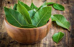 Minulý týden jsem zhubla víc kilo než za celý měsíc, zbavila se bolesti kloubů a problému s křečovými žílami: Recept s touto bylinkou našich dědečku strčí do kapsy i drahé léky z lékárny! - Growing Herbs At Home, Best Herbs To Grow, Bay Leaf Benefits, Wasp Repellent, Types Of Herbs, Bay Leaves, Herbs Indoors, How To Make Tea, Insomnia