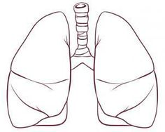 Human Lungs Pencil Drawing HLP09