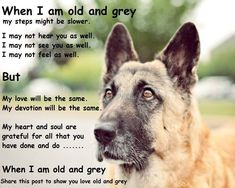 My baby is old and grey and i love him more and more everyday. And my fear of losing him gets worse and worse. GSD Found on graydogpetphotography.com