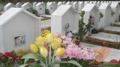 Cemetery for people and pets in Fauglia (PI) Italy
