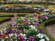 flower+gardens | flowers for flower lovers.: Flowers garden wallpapers.