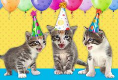 """The adorable kittens are here to meow """"Happy Birthday"""" wishes to mew. This fun, pun-filled card is perfect for cat-lovers of all ages."""