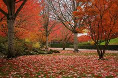 Fall/Autumn on the Nike Campus, Beaverton, Oregon