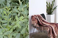 Símbolos de proteção - Plantas que curam - Revista Westwing