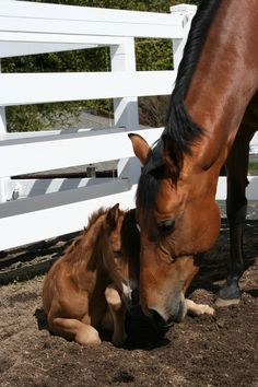 Spring brings new #foals to Oregon Horse Country.