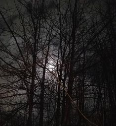 Fullish moon through our ancient apple tree.Portland countryside by David Cantrell Dusk To Dawn, Apple Tree, Portland, Countryside, Sunrise, David, Moon, Celestial, Outdoor