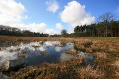 Images Ruinen, Drenthe National Park Dwingelderveld
