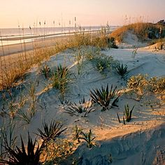 Summer is far from over at Sea Camp Beach, Cumberland Island, Georgia. Collect shark's teeth and shells from the soft gray sand, and sleep under the stars in one of Sea Camp's tents on the beach. Coastalliving.com