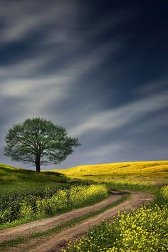 country landscape photography love my golden Landscape Photos, Landscape Art, Landscape Paintings, Landscape Photography, Nature Photography, Beautiful World, Beautiful Places, Beautiful Pictures, Photos Voyages