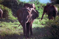 Samburu, Kenya.  Old 35 mm film.  photograph by Cheryl Merrill