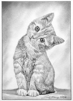 Sketch of a Kitten by Craig Tracy. - Sketch of a Kitten by Craig Tracy. Sketch of a Kitten by Craig Tracy. Sketch of a Kitten by Craig T - Pencil Art Drawings, Art Drawings Sketches, Cool Drawings, Animal Sketches, Animal Drawings, Kitten Drawing, Realistic Cat Drawing, Cat Coloring Page, Cat Sketch