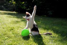 Gato en un área verde con una pata arriba y un globo en color verde frente a él