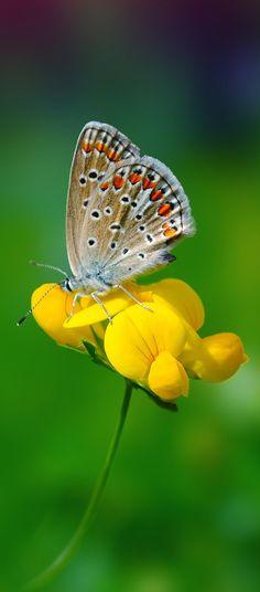 Beautiful butterfly #weloveboho#boho#bohemian#gypsy#freespirit#fashion#moda